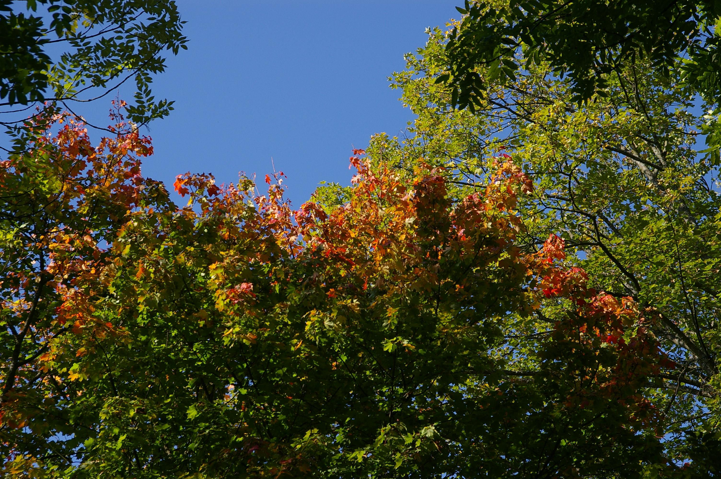 Warum färben sich die Blätter unserer Bäume im Herbst gelbrot?